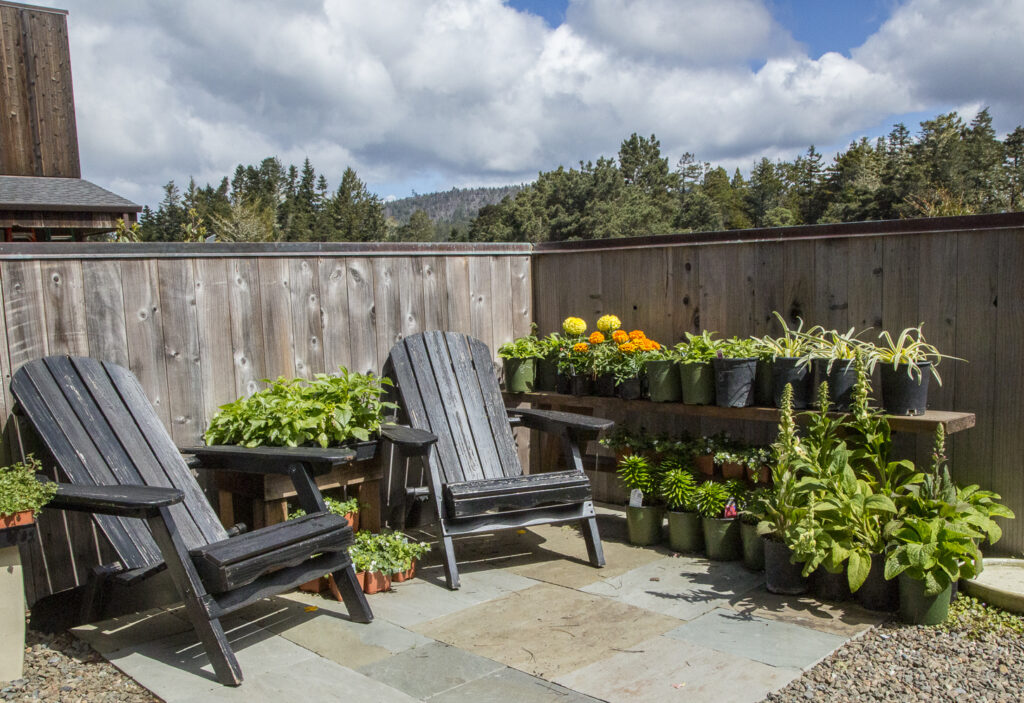 Two chairs on a stone patio floor with a fence behind and lots of potted plants for sale.