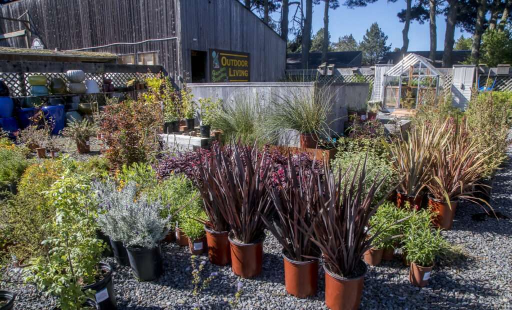 Outdoor Living section showing plants for sale.